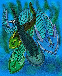 File:Cephalaspis species.jpg