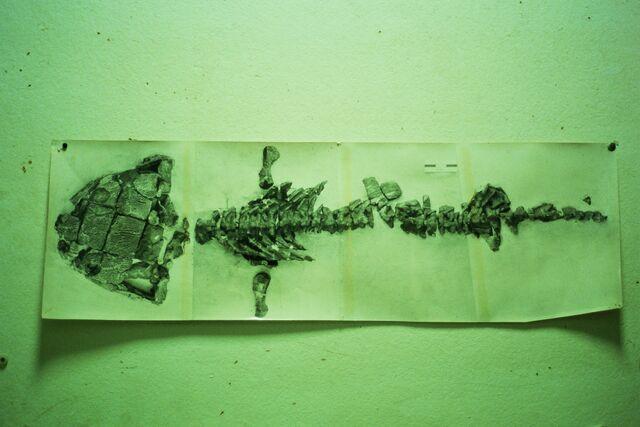 File:Labrythodont .jpg