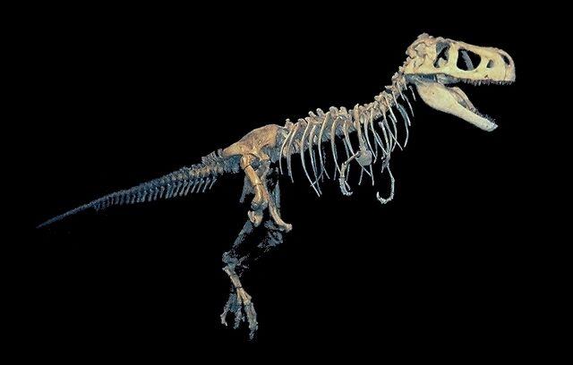 File:Tarbosaurus bataar.jpg