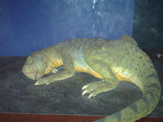 File:LNHM Psittacosaurus.JPG