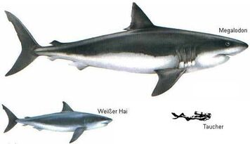 Megalodon Great White