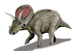 Torosaurus BW