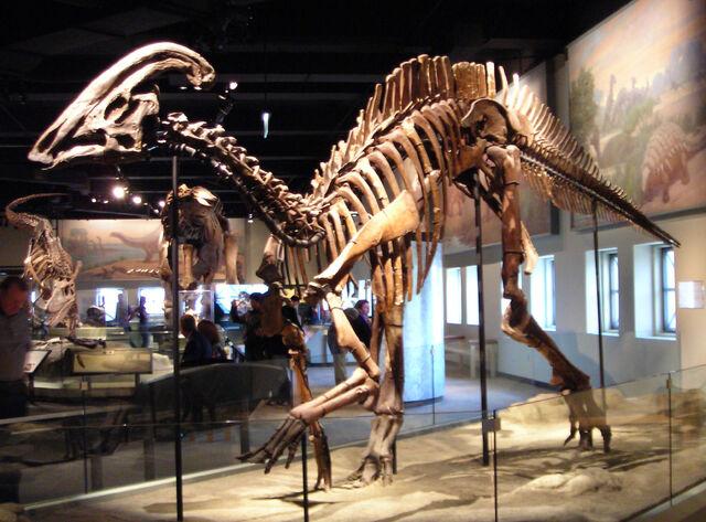 File:Parasaurolophus cyrtocristatus-1-.jpg