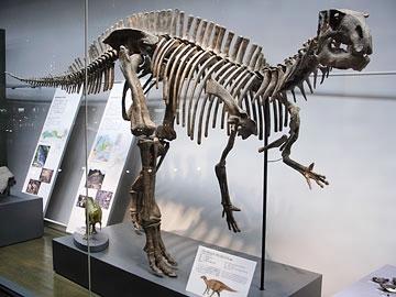 File:Fukuisaurus.jpg