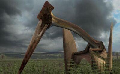 Hatzegopteryx 1