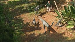 1x6 OrnithomimusFlockEscaped