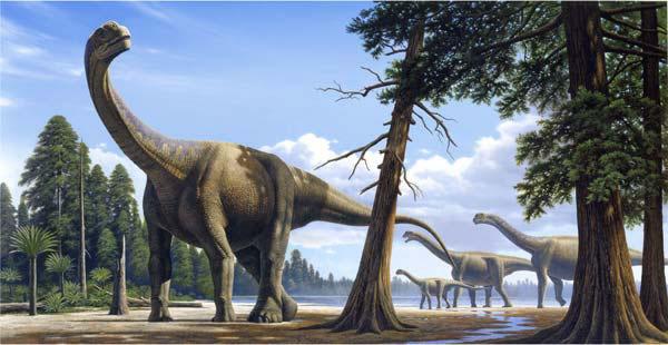 File:Rm camarasaurus jpg.jpg
