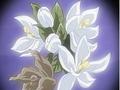 HPC19.Flower