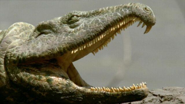 File:Prionosuchus.jpg
