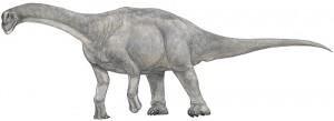 File:Camarasaurus-M.Shiraishi-300x109-1-.jpg