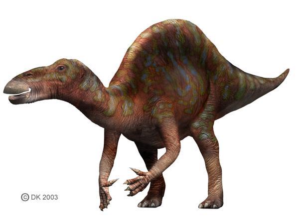 File:Ouranosaurus1.jpg