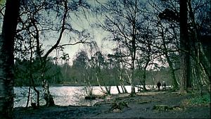 1x2 NewForest