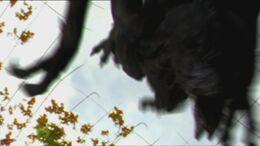 1x6 Predator 3