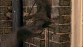1x5Anurognathus3