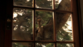 1x5Anurognathus4