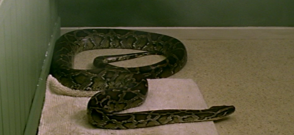 File:Python.png