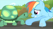 20111231105305!Tank Rainbow Dash foot-bump S2E07