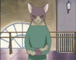 Neko-sensei mr-cat