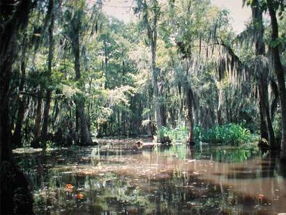 File:Swampland.jpg