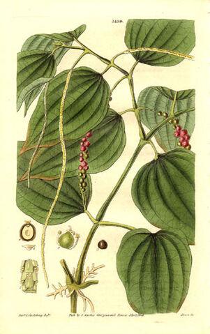 File:Herb.jpg