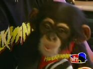 Monkey Business.00017