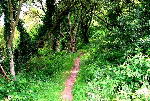 File:Welsh woods.jpg