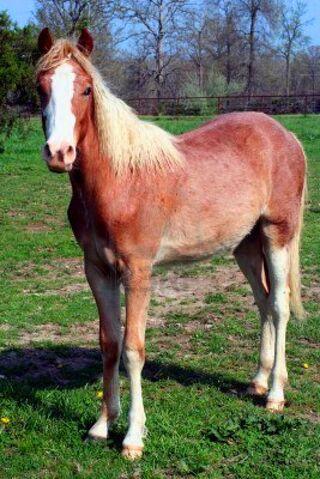 File:Roan-horse.jpg