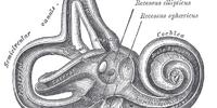 Superior semicircular canal