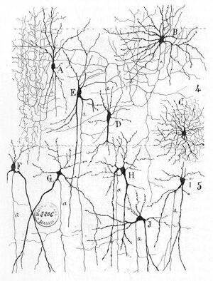 Cajal actx inter