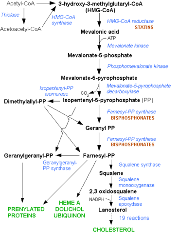 File:HMG-CoA reductase pathway.png