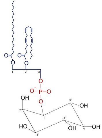 File:Phosphatidylinositol.jpg