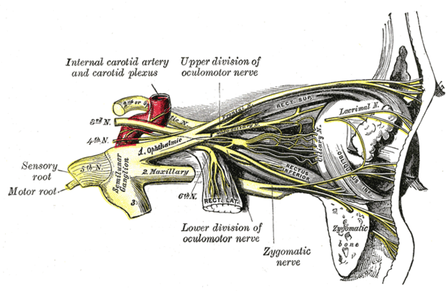File:Gray777.png