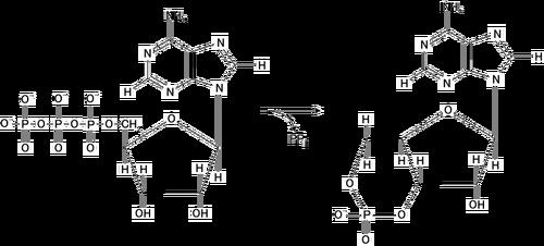 Adenylate kinase