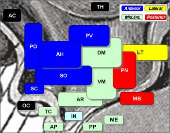 HypothalamicNuclei