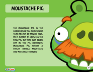 1000px-Moustache Pig Toy Care