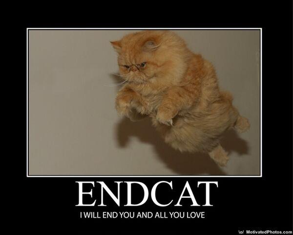 File:Endcat.jpg