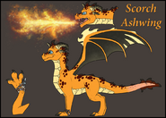Scorch ashwing reference by jaderavenwing-d9i60g5