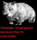 File:Edru's UnloveableWombat.png