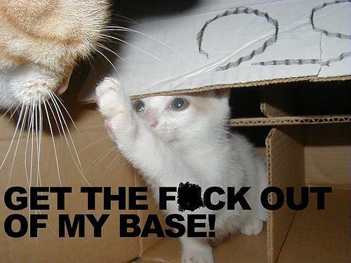 File:Godliest Fun cat picture 025.jpg