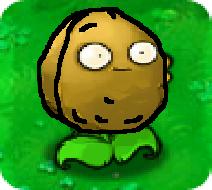 Nutflower