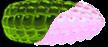 Acid Gum Cob