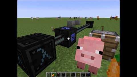 Schrödingers Pig