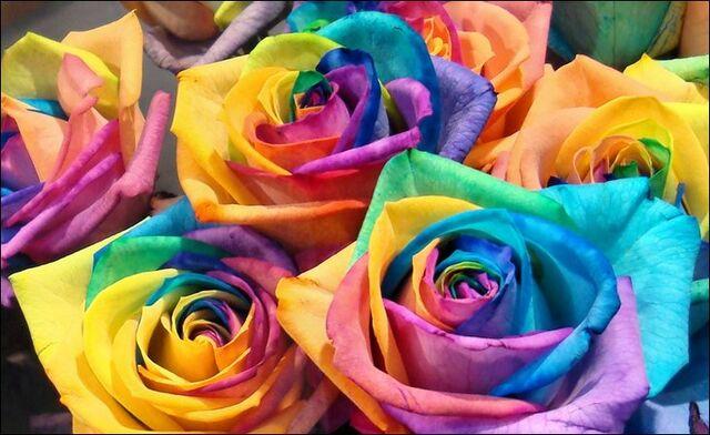File:Rainbow-roses02 (1).jpg