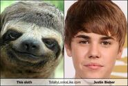 This-sloth-totally-looks-like-justin-bieber