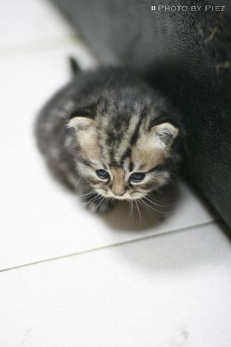 Kitty Cat sleeping!!