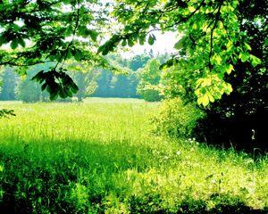 Irish meadow by rose petals