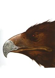 Original Hawk Concept Art