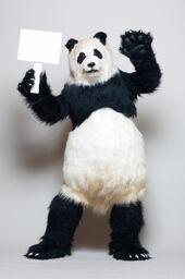 Genma - panda - live action