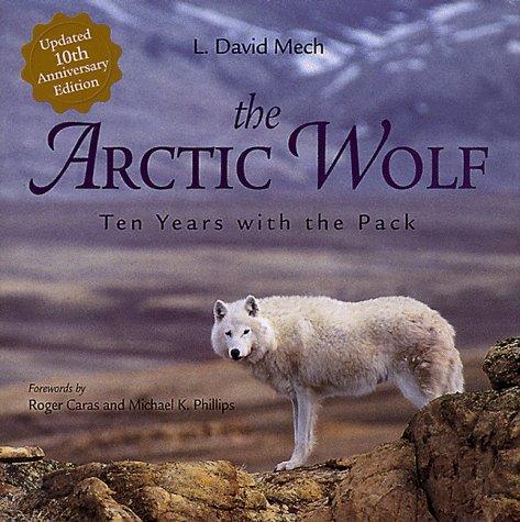 File:Arctic wolf-L. David Mech.jpg