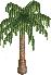 Palm$16